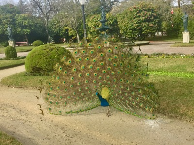 The peacocks were a fun surprise-- I wasn't expecting them!