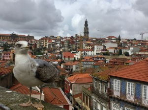 This bird has no idea he lives in an incredible place.