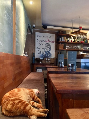 I loved the message of the sleeping cat, local art and organic, fair trade foods and drinks.